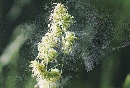 ビタミンDとグルテンフリーを1週間継続したら、花粉症がピタリと治まった